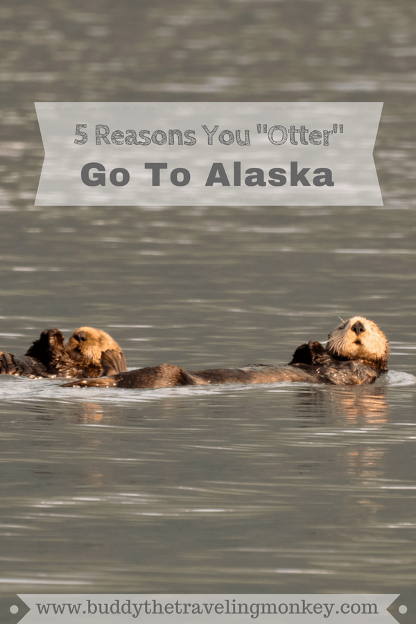 There are so many reasons to visit Alaska! From gorgeous scenery to incredible wildlife, these are our top five reasons to visit Alaska.