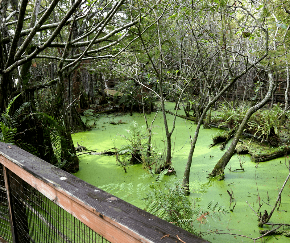 boardwalk and wetlands of Busch Wildlife Sanctuary