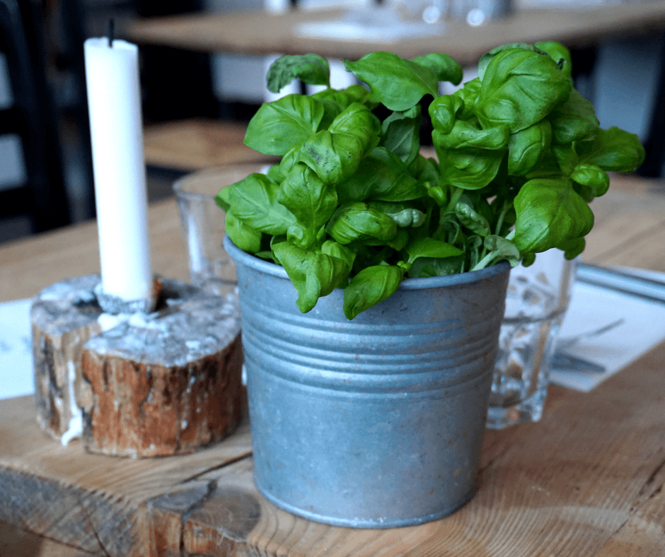 potted plant inside mother italian restaurant