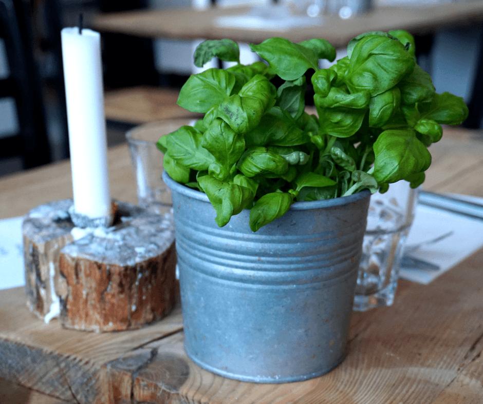 potted plant inside mother italian restaurant