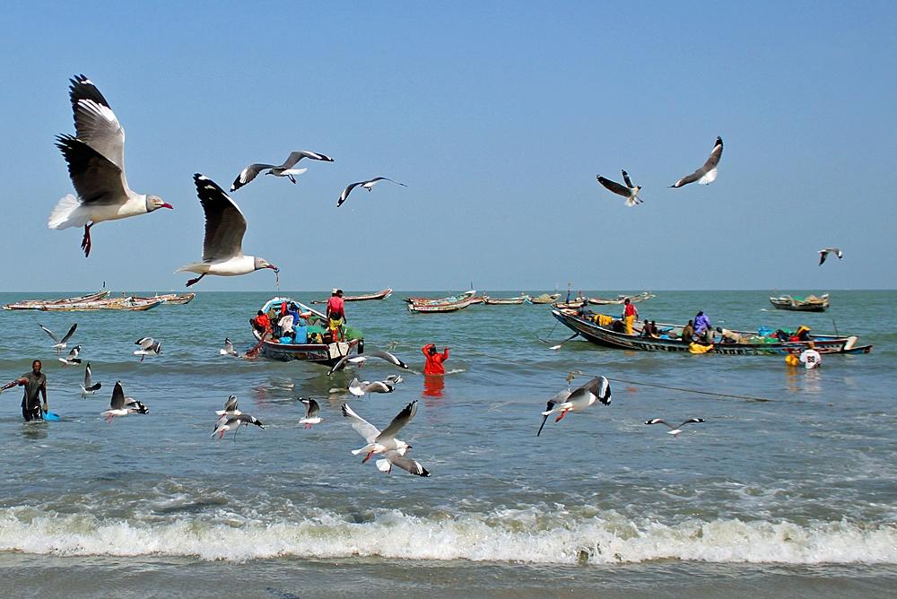 Pirogues by Tanji Fishing Village