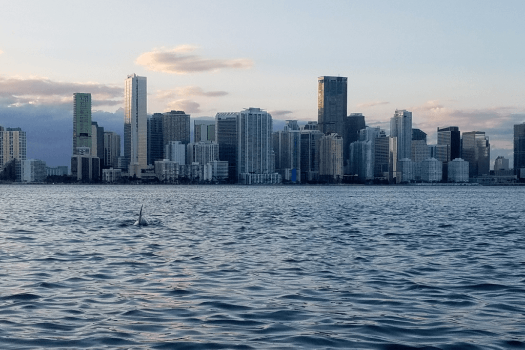 View of downtown Miami skyline and a dolphin