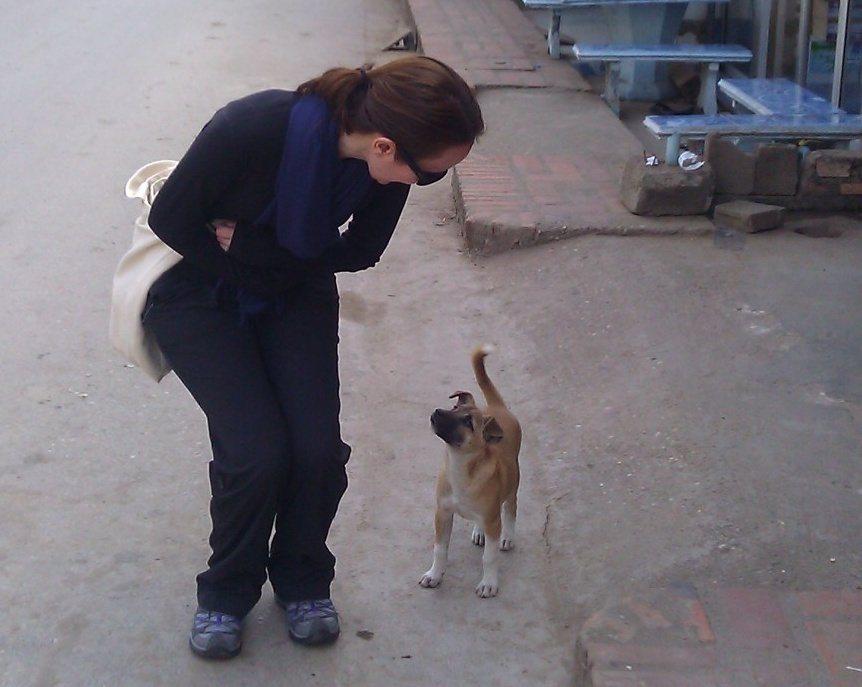 stray dog in Luang Prabang