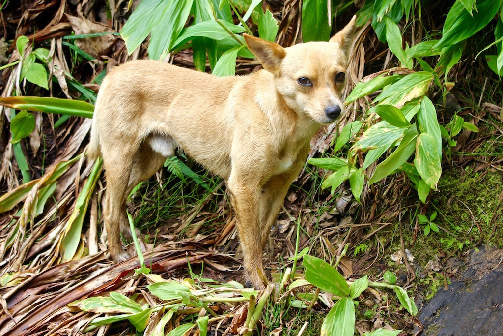 stray dog in the mountains near Jardin, Colombia