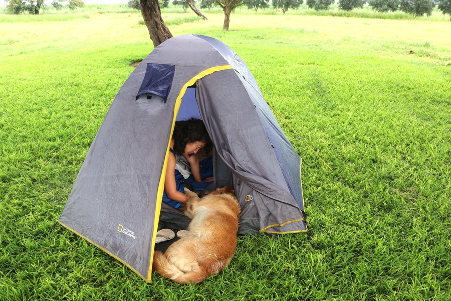camping with a Labrador in Namibia