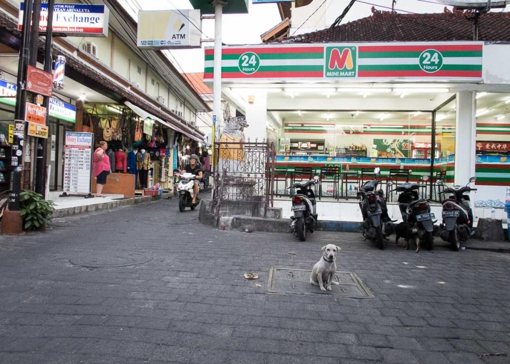 Bali Kuta dogs