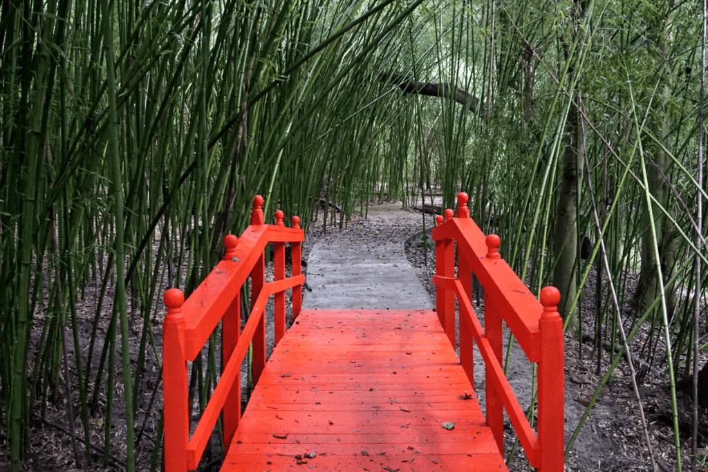 Bamboo garden at Kanapaha Botanical Gardens