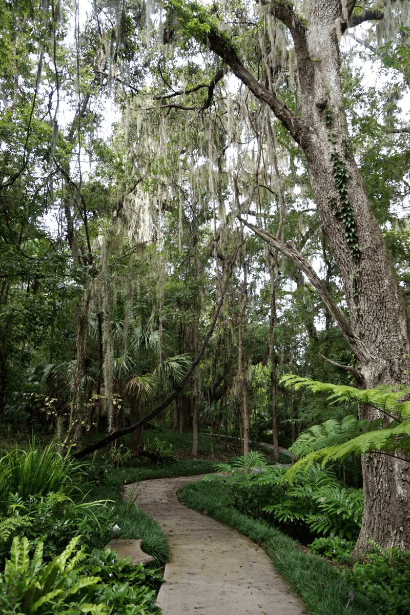 Following the paved walkway through the trees at Kanapaha Botanical Gardens
