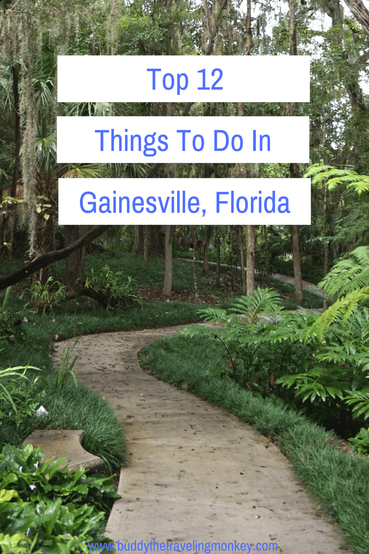 There are so many fun things to do in Gainesville, Florida! Enjoy the outdoors, immerse yourself in local history, or chow down on amazing cuisines.