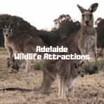 Adelaide Wildlife Attractions