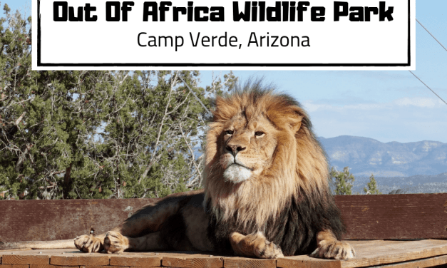 Arizona Wildlife Park: Out Of Africa