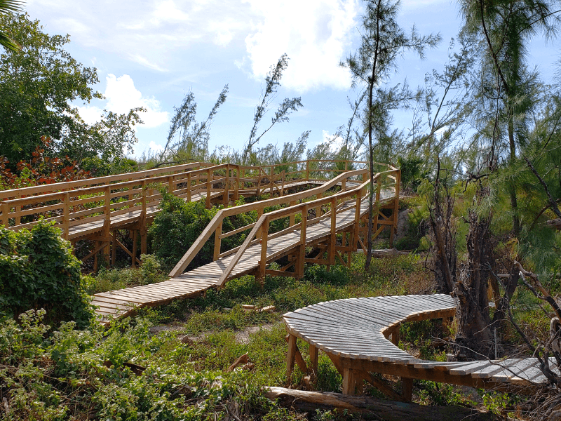 One of the many mountain biking trails in Virginia Key in Miami
