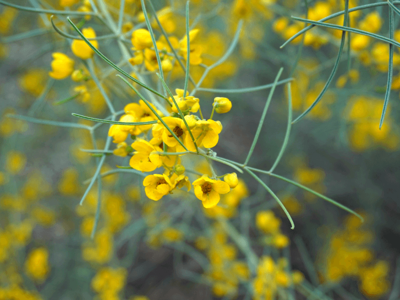 One of the many flowers on the grounds of the Schnepf farms, one of the best day trips from Phoenix