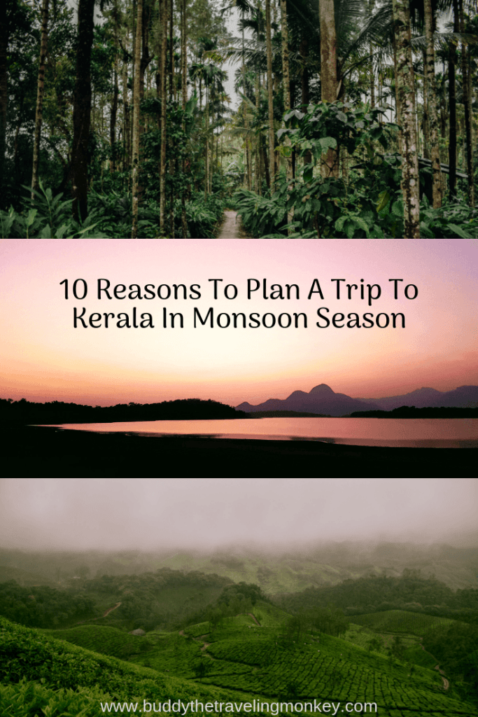 Heading to India? We have 10 reasons for you to plan a trip to Kerala during monsoon season. You'll fall in love with the green and lush area!