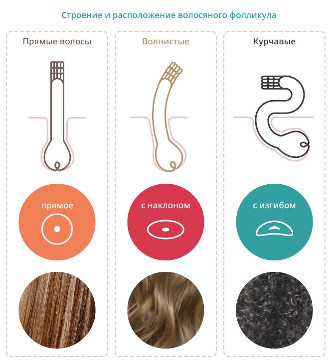 Строение и расположение волосяного фолликула определяющее тип волос