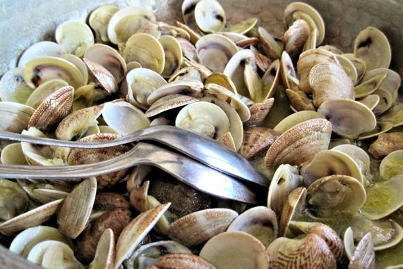 Мелкие моллюски вонголе