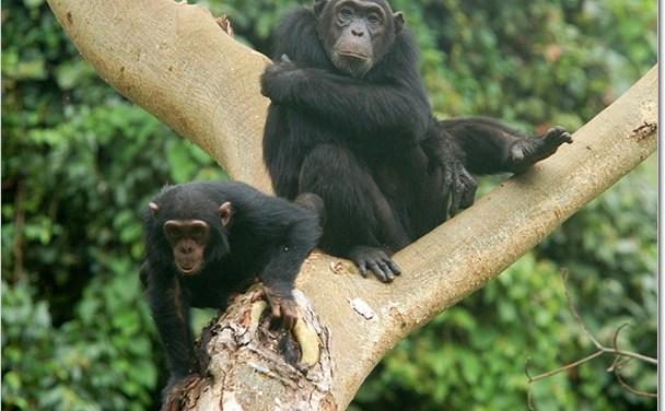 4 Day Safari to Mahale National Park