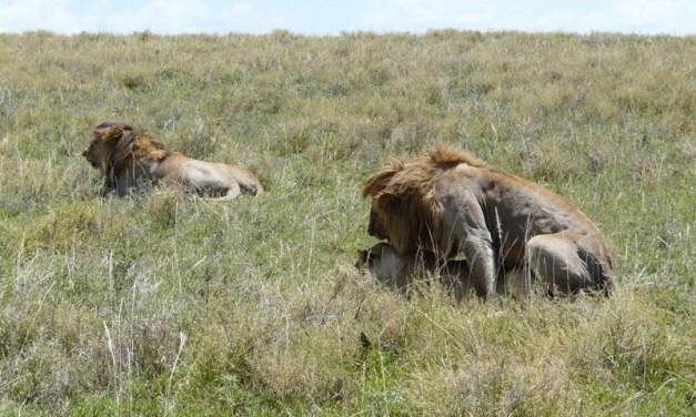 Camping Safari  Ngorongoro Manyara 3 Days