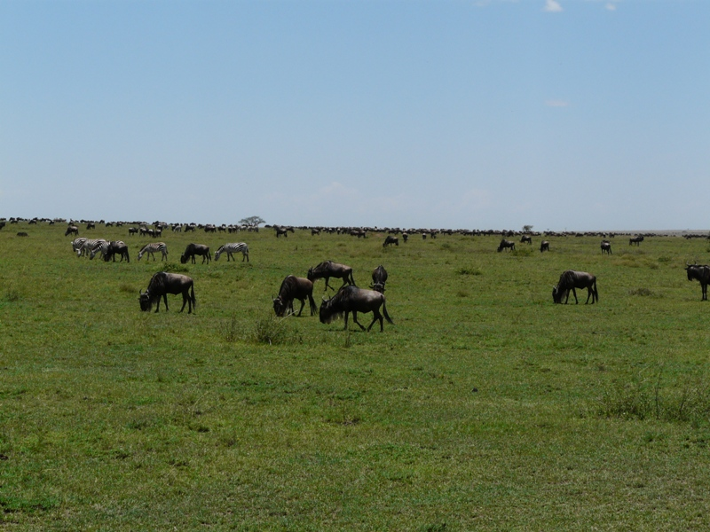 Ngorongoro Serengeti Adventure 3 Days