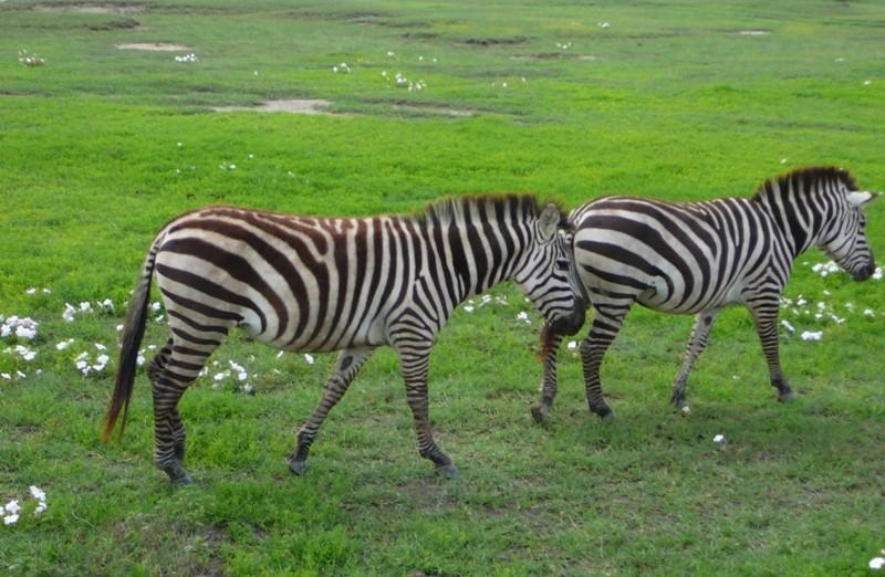 Ngorongoro Serengeti 5 Day Adventure