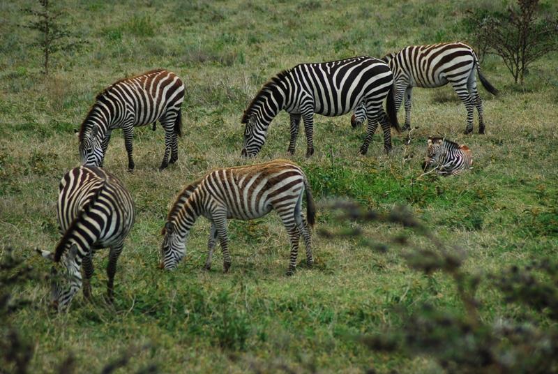 Northern Tanzania Camping Safari  6 Day