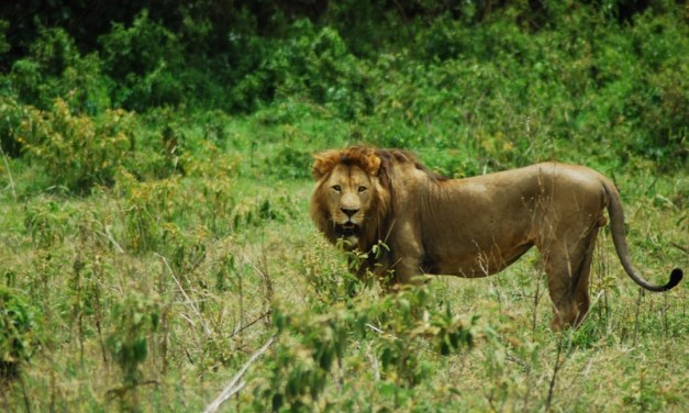 Great Serengeti, Ngorongoro Safari 6 Days