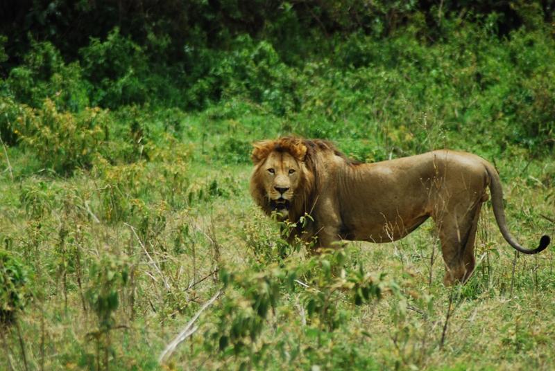 Great Serengeti, Ngorongoro Safari 6 Days