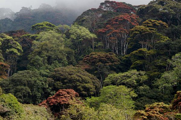 Udzungwa Mountain Forest National Park