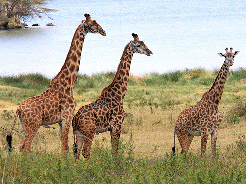 The Arusha National Park