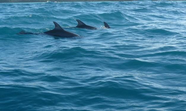 Dolphins Tour in Zanzibar 4 Days