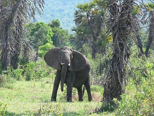 5 Day Safari Selous Game Reserve Mikumi