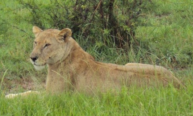 3 Day safari program Mikumi National Park