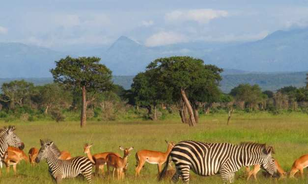 3 Day Safari to Mikumi National Park