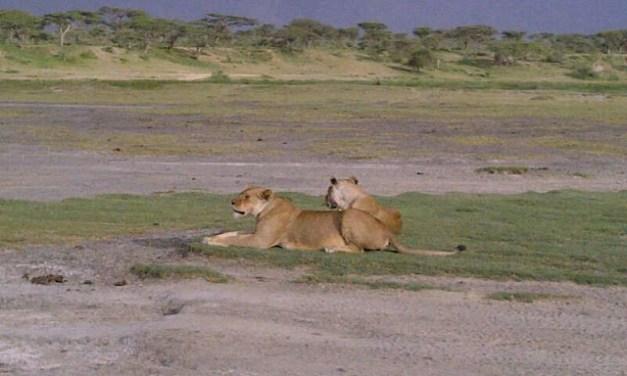 A 4 Day Tour to Northern Tanzania, Serengeti and Ngorongoro