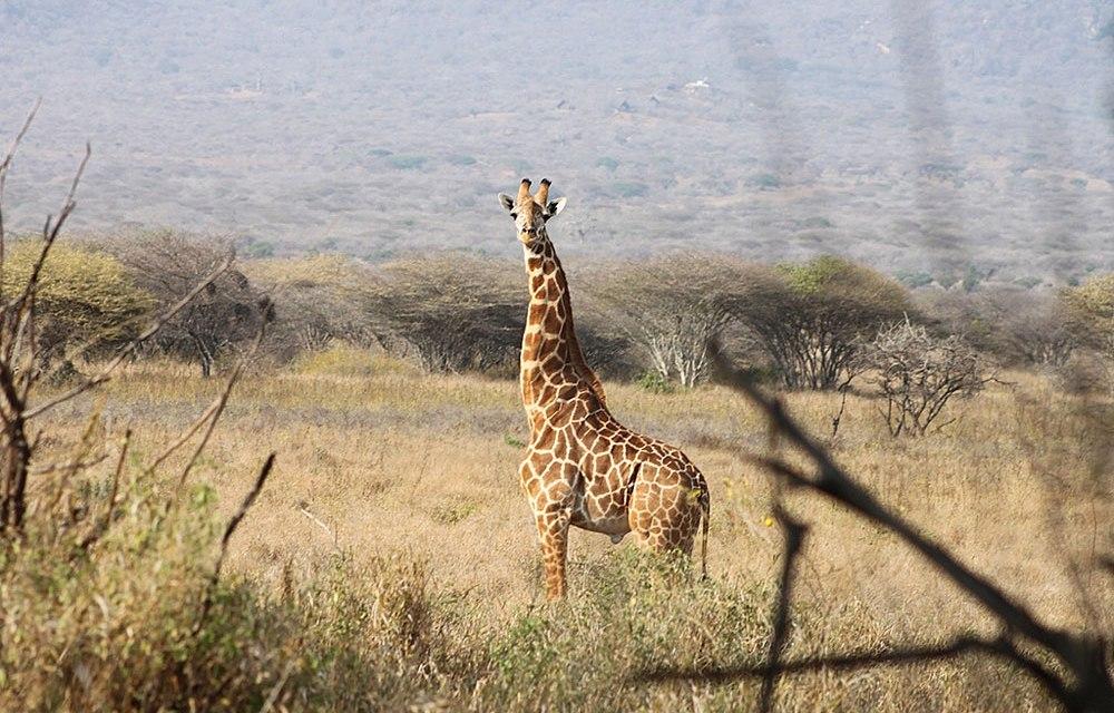3 Day Tarangire Ngorongoro Safari