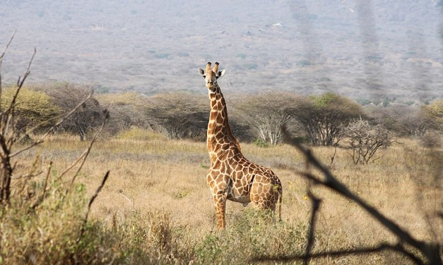 3 Day Tarangire Ngorongoro Safari