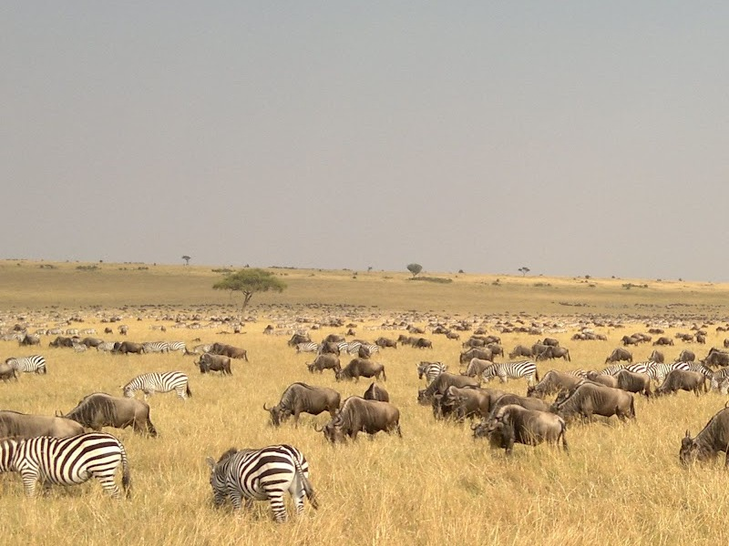 7 Day Lodge Safari to Serengeti Ngorongoro