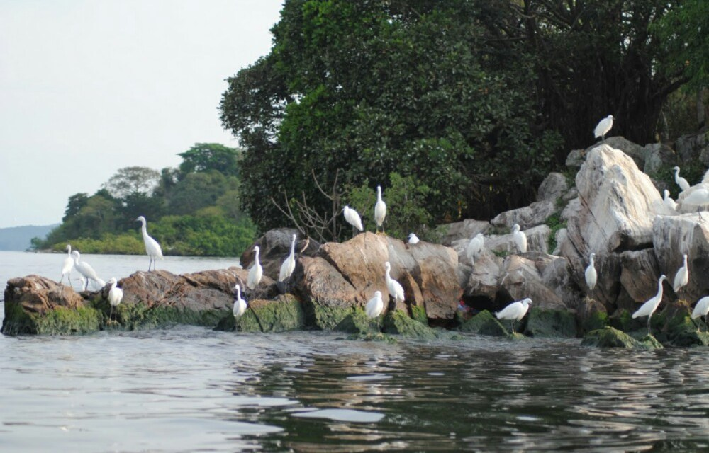 Lake Victoria (Great Lakes Region) 3 Day Safari