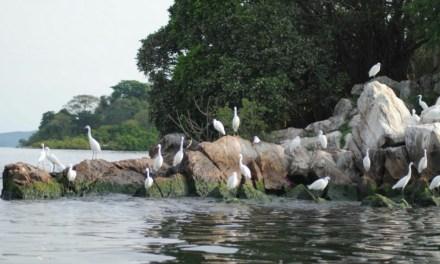 Lake Victoria (Great Lakes Region) 3 Day Safari