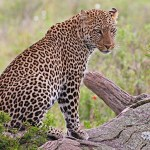 Serengeti and Ngorongoro 6 Day Safari