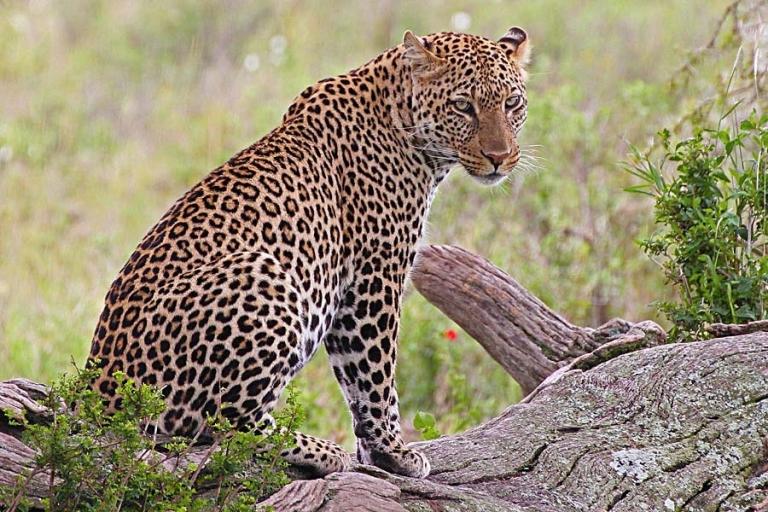 Serengeti and Ngorongoro 6 Day Safari