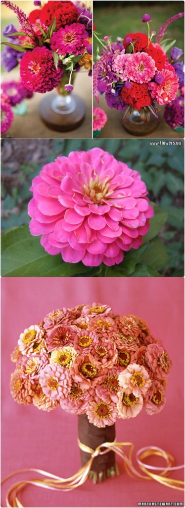 zinnia autumn wedding flowers