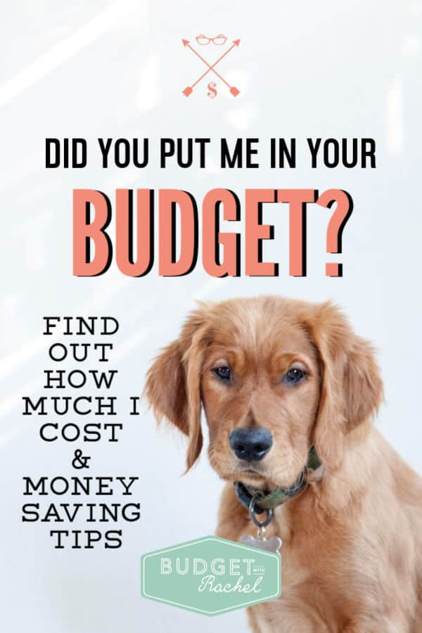 Pet expenses to expect | what is the true cost of a new pet | man's best friend | how to budget for pets | budgeting for pets | budgeting for beginners #pets #budget #budgeting #moneysavingtips