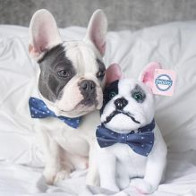 Stuffed animals of art