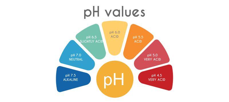 Cancer Prevention, pH Balance