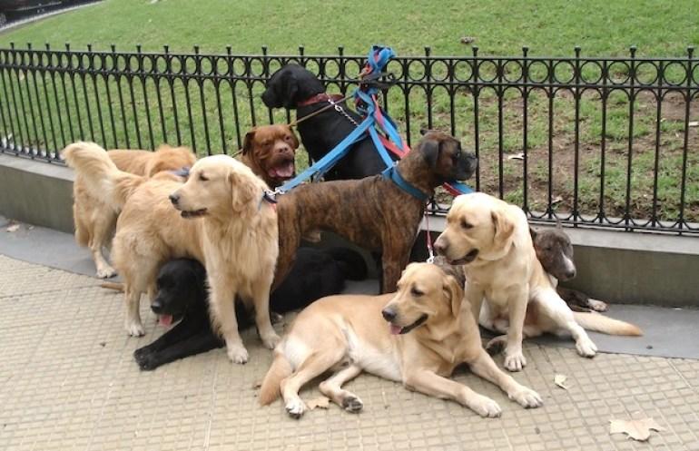 Cachorros na Recoleta