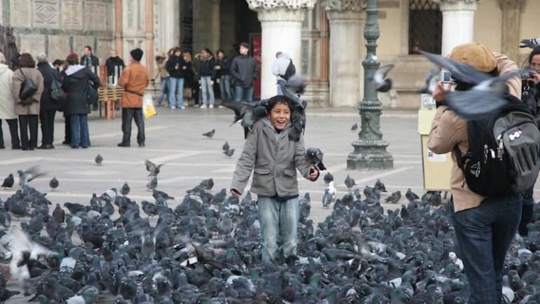 pombos veneza 2
