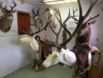 Wilderness Country Taxidermy and Archery