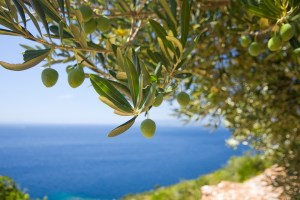 How to preserve olive oil