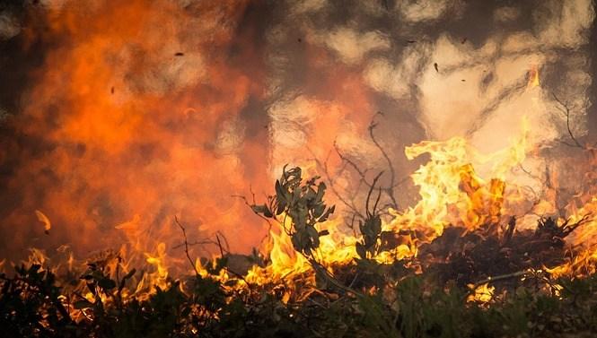 Los afectados por el incendio de Moguer pretenden emprender acciones por vía judicial